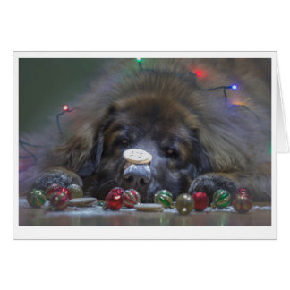 Good Leonberger Christmas Card