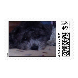 """Good Looking Puppy  """"I see You"""" Stamps"""