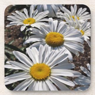 Good Morning Daisies Coaster