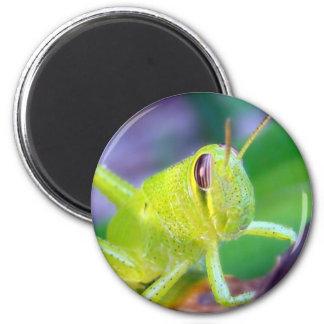 Good Morning Grasshopper magnet