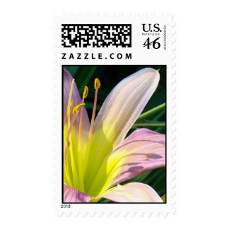 Good Morning Lily Postage