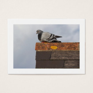 Good Morning Pigeon (Bordered) Business Card