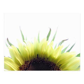 Good morning sunflower postcard