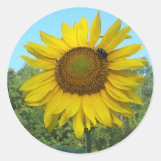 Good Morning Sunshine Stickers
