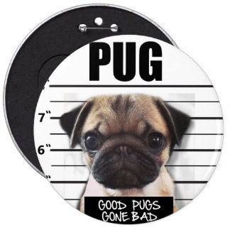 good pugs gone bad button