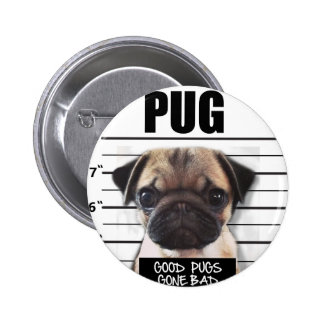 good pugs gone bad pinback button