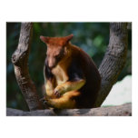 Goodfellows Tree Kangaroo Posters