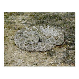 Goodnight Sssssnake...Mr. Rattlesnake that is Postcard