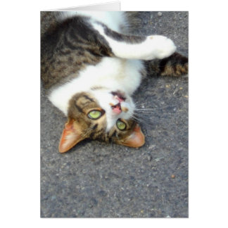 Goofball Upside Down Kitty Greeting Card