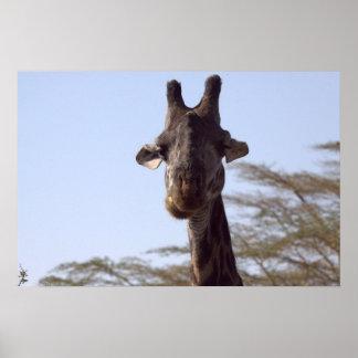 Goofy Giraffe Poster
