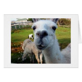 Llama Cards Invitations Greeting Photo Cards Zazzle