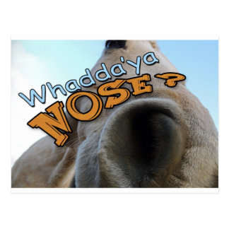 Goofy Palomino Whaddya Nose Horse Postcard