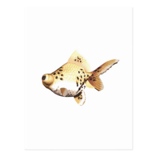 Google Eyed Goldfish 4 Postcard