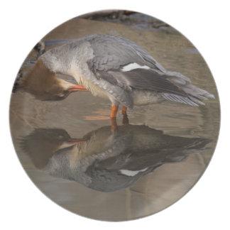 Goosander Plate