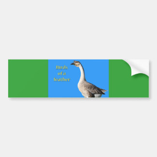 Goose: African Gray Goose Says: Birds of a Feather Bumper Sticker