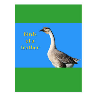Goose: African Gray Goose Says: Birds of a Feather Postcard