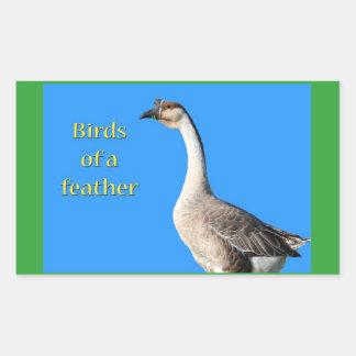 Goose: African Gray Goose Says: Birds of a Feather Rectangular Sticker
