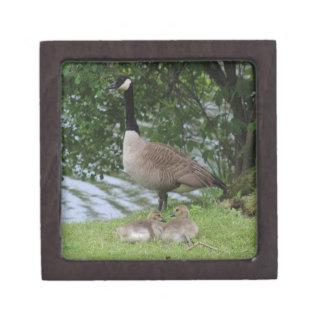 Goose and Goslings Premium Keepsake Boxes