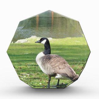 Goose at the waterfront, Wildlife Animals, Nature Award