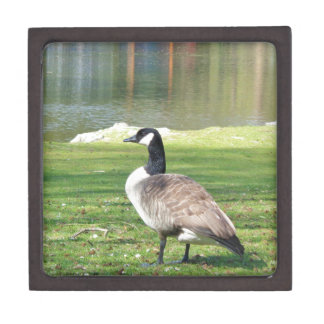 Goose at the waterfront, Wildlife Animals, Nature Keepsake Box
