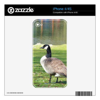 Goose at the waterfront, Wildlife Animals, Nature Skins For iPhone 4