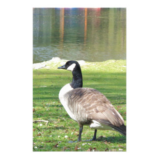 Goose at the waterfront, Wildlife Animals, Nature Stationery