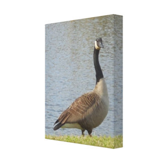 Goose By Pond Canvas Art