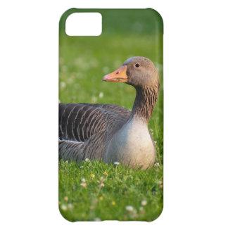 Goose Case For iPhone 5C