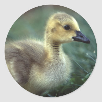 goose classic round sticker