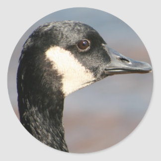 Goose Closeup Classic Round Sticker