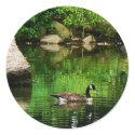 Goose Floating on Pond sticker