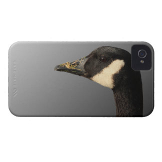 Goose head Blackberry Bold Case