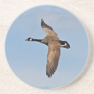 Goose in Flight Drink Coaster