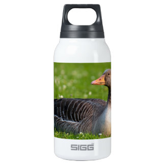 Goose Insulated Water Bottle