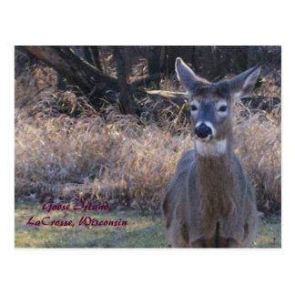 , Goose Island,LaCrosse, Wisconsin Post Cards