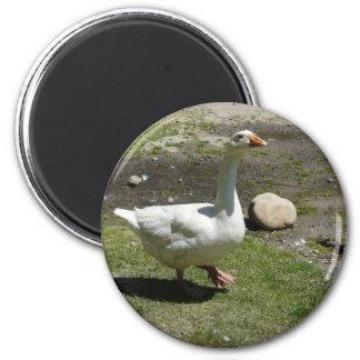 goose refrigerator magnet