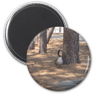 Goose Magnets