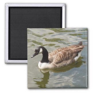 Goose Magnet
