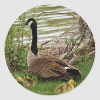 Goose Mom and Babies Classic Round Sticker