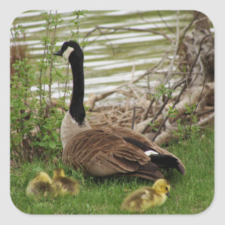 Goose Mom and Babies Square Sticker