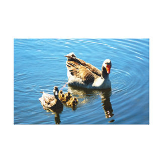 Goose mothers ducks canvas print