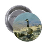 Goose on Rock Button
