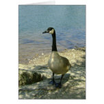 Goose on Rock Card
