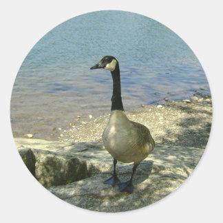 Goose on Rock Classic Round Sticker
