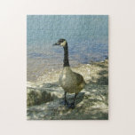 Goose on Rock Jigsaw Puzzle