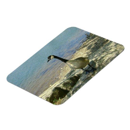 Goose on Rock Magnet