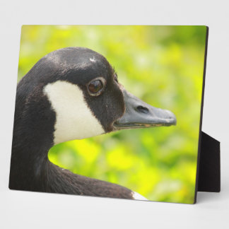 goose portrait display plaque