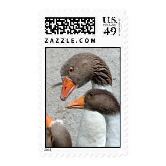 Goose Postage Stamps
