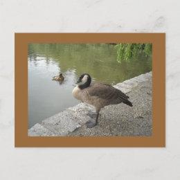 Goose postcard