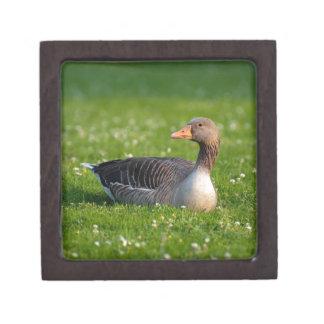 Goose Premium Keepsake Box